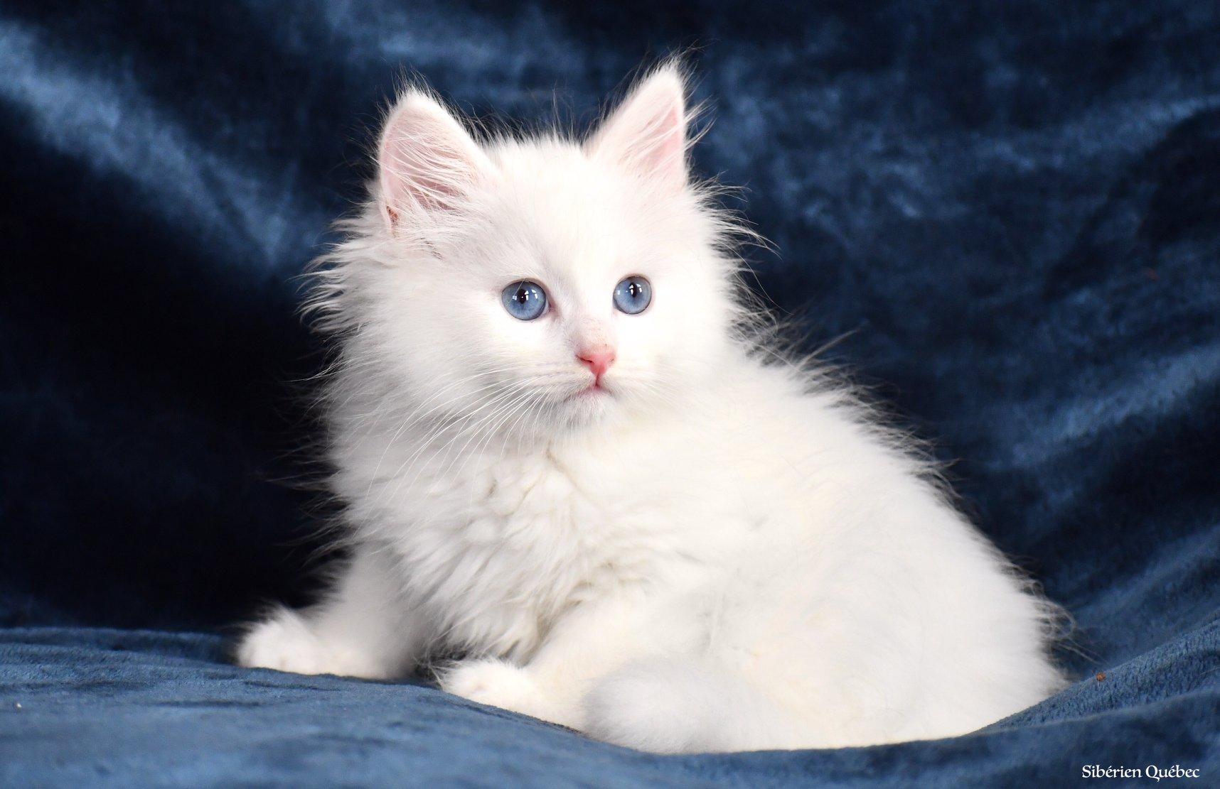Female Pure White