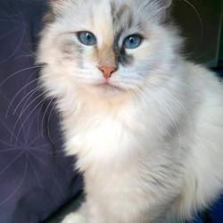 Kira - Siberien quebec