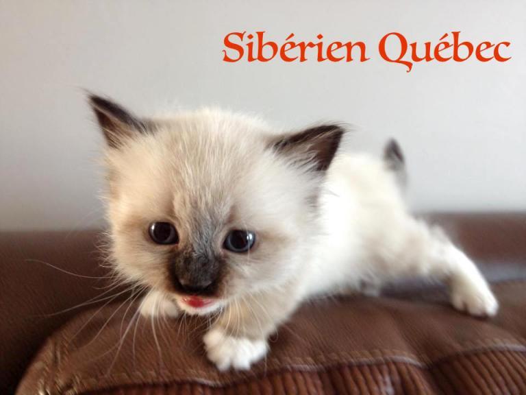 Marie - bebe - Siberien Québec