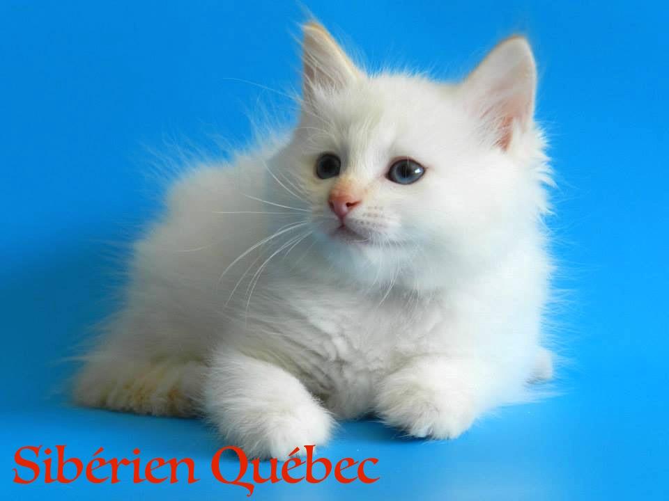 Elisey baby -Siberian Quebec
