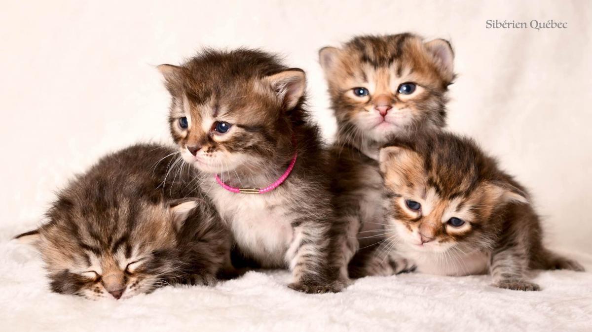 CatWomen Kittens born on September 4th, 2017